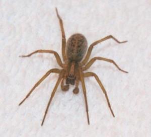 Pest Identification Wenatchee Pest Control Apple Land